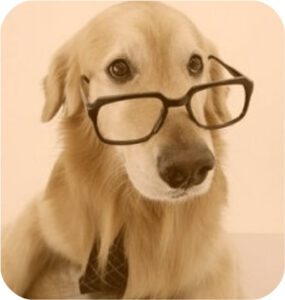 Dog Training, and dog obedience training, makes your dog more reliable.