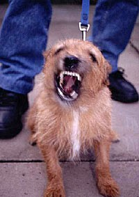 Leash reactivity or leash aggression is a common dog behavior problem we resolve in Philadelphia.