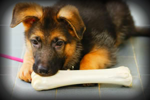 Puppy training can prevent dog behavior problems like inappropriate chewing and hyperactivity