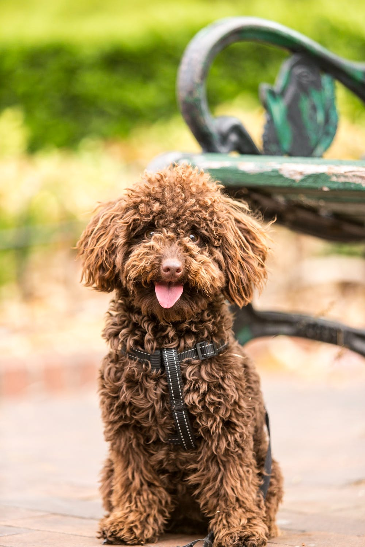 Philadelphia Behavior Modification and Real World Dog Training in Philadelphia PA