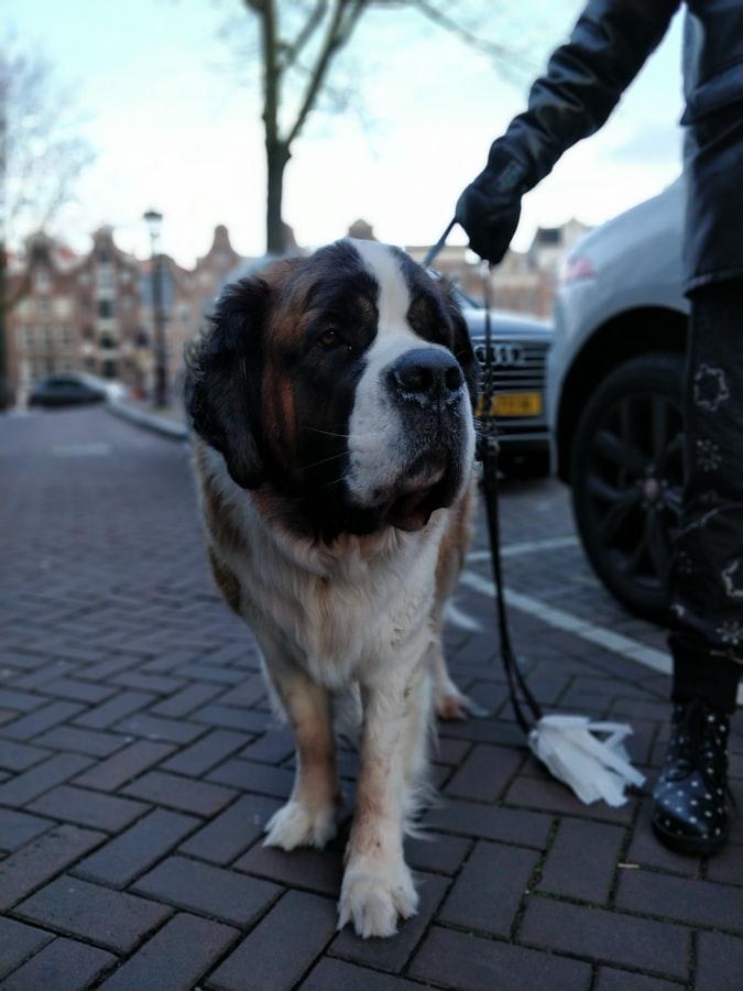 Philadelphia Dog Leash Training in Philadelphia PA